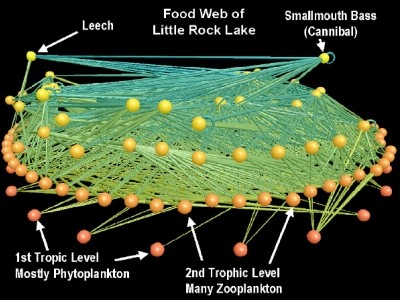 A food web at Little Rock Lake
